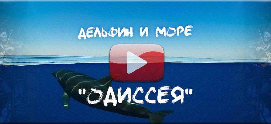 """Песня о дельфине - песня о море - песня про океан. """"Дельфин и Море: Одиссея"""", Александр Каренин"""